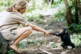 Jane Goodall 6