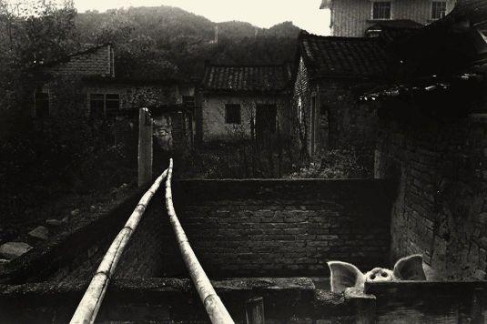Cerdito  -Fotografía de Jing Huang